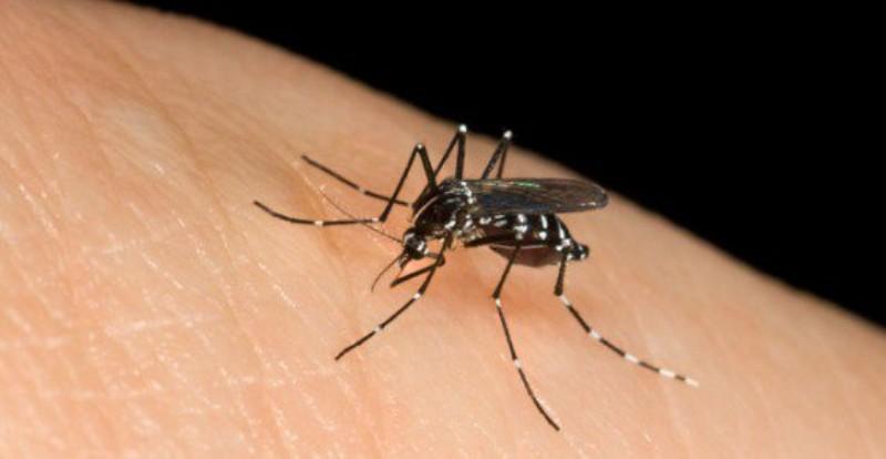 Come-evitare-di-essere-punti-da-zanzare-ed-altri-insetti_800x414